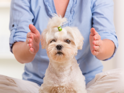 Reiki therapy for animals