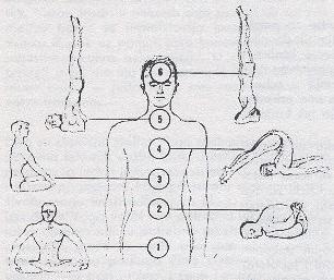 Hatha Yoga Basic Asanas